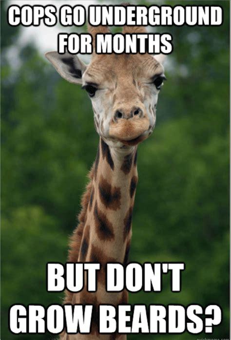 Funny Meams - funny giraffe meme www pixshark com images galleries