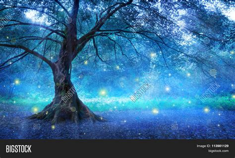 mystical images tree mystic forest image photo bigstock