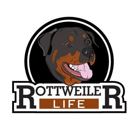 rottweiler lifespan rottweiler rottweilerlife