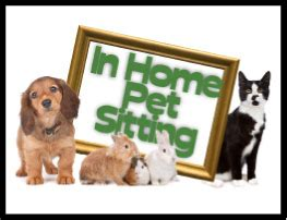 in home pet sitting in home pet sitting gallery