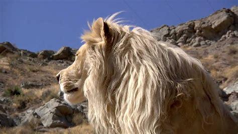 white lion film youtube lufuno the white lion hd 720p youtube