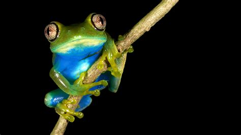 African amphibians and climate change - News and events ...