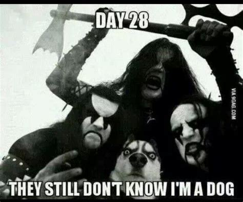 what they still dont day 28 they still don t know i m a dog animals