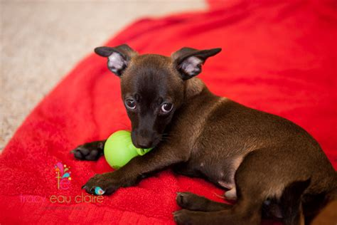 puppy adoption az puppy rescue arizona photo