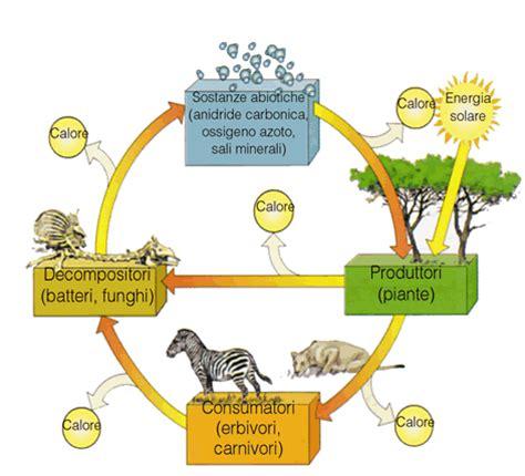 la catena alimentare spiegata ai bambini trichorhina tomentosa terraria