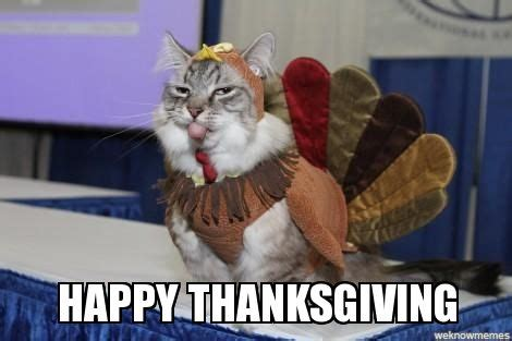 Happy Thanksgiving Memes - best 25 happy thanksgiving memes ideas on pinterest