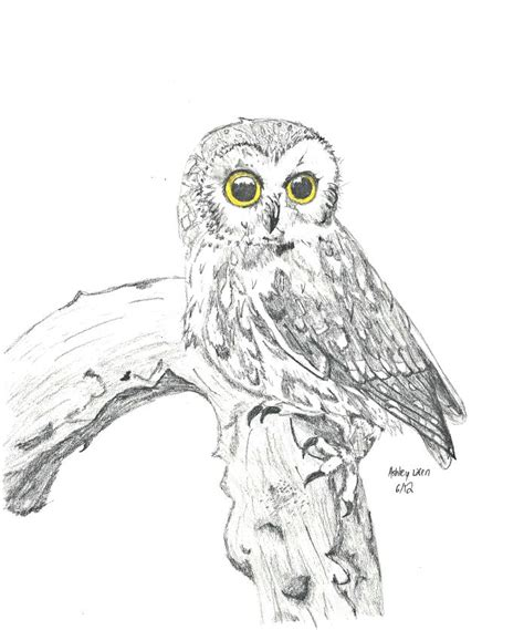 how to draw doodle owl realistic owl on a branch drawing