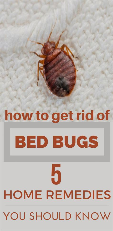 how u get bed bugs getting rid how to get rid of termite home remedy www e