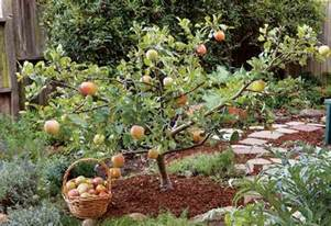 Small Backyard Orchard by Create Small Fruit Trees With This Pruning Method