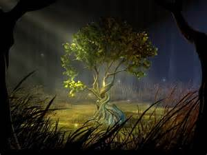 magic tree tree oracle reading for embracing change cauldrons and