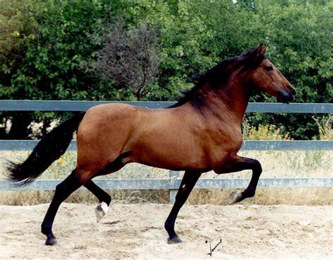 imagenes surrealistas de caballos imagenes de caballo imagui