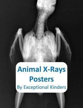printable animal x rays animal x ray posters preschool ideas to save pinterest