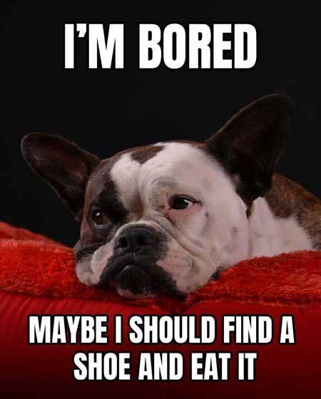 menacing cute dog memes grumpy dog   barking