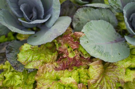 Fall Vegetable Garden Planting Plan Fall Vegetable Garden Plans