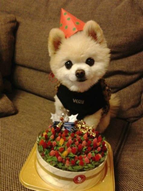 puppy birthday aww happy birthday cutie pomeranian birthday