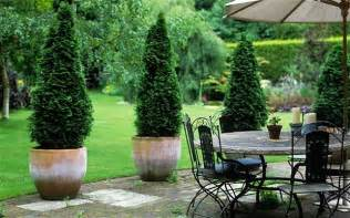 best patio plants how to decorate with trees potted trees trees and