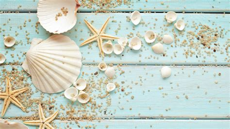 shell wallpaper seashells wallpaper collection most beautiful places in the world free wallpapers