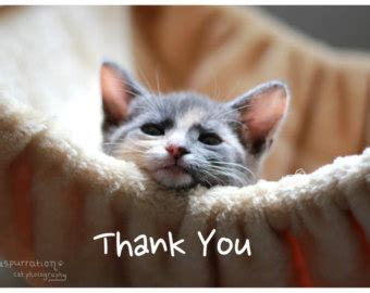 Thank You Cat Meme - pics for gt thank you kitten meme