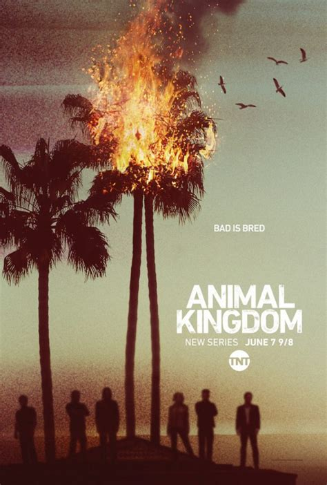 poster and images for the animal kingdom tv series