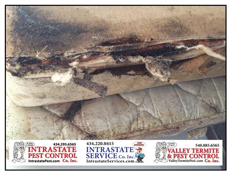 do it yourself pest control bed bugs holiday guests may bring bed bugs intrastate pest