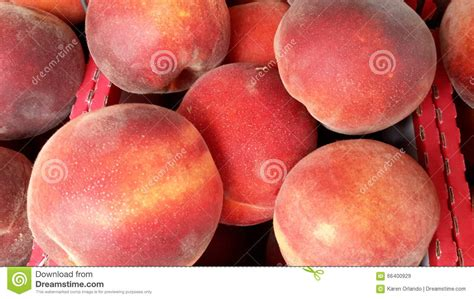 stock image image of fruit homegrown farmers