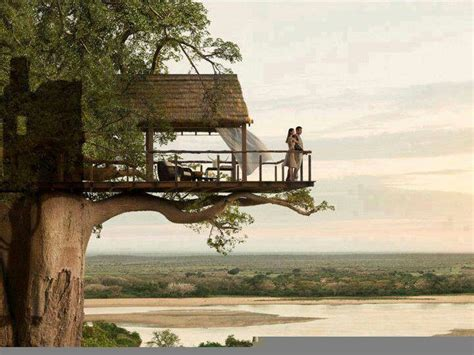 really cool tree houses cool tree house pretty perfect destinations pinterest