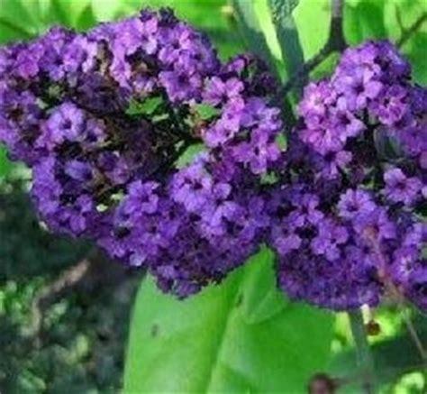 fiori profumati da giardino piante da fiore domande e risposte giardino
