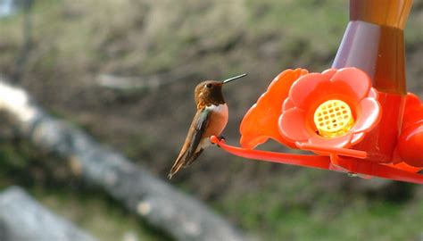 how to stop hummingbird nectar from freezing