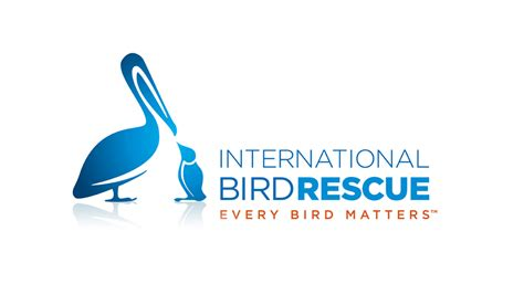 international bird rescue newsroom media resources