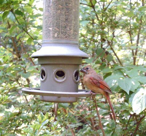 birds attracting walter reeves the gardener