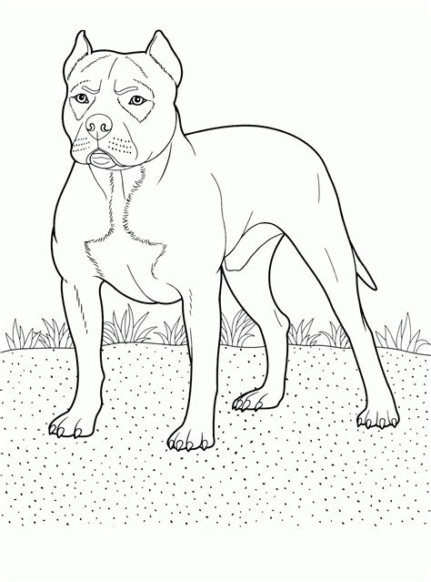 pitbull drawings coloring pages