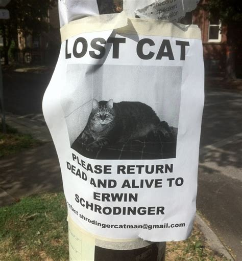Lost Cat Meme - 30 hilarious street posters you certainly haven t seen around