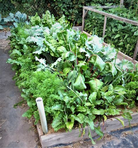 Get Your Garden Started With Easy Spring Vegetables And Best Cover Crop For Vegetable Garden