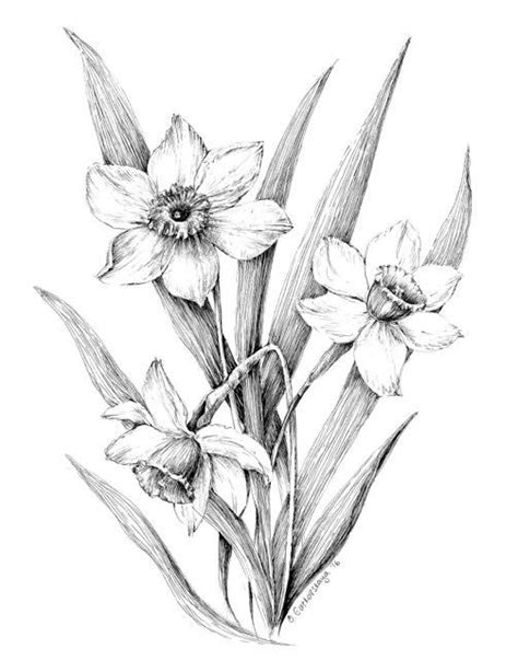 Ideas For Daffodil Varieties Design 1000 Ideas About Narcissus On Birth Flowers March Birth Flowers And Birth