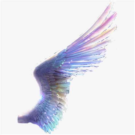 colored wings colored wings clipart www pixshark images