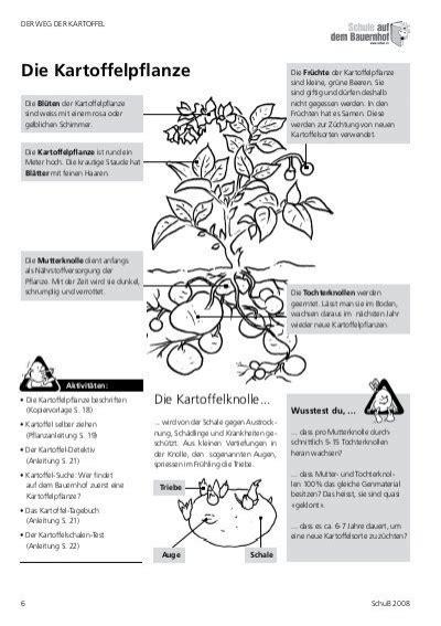 Beschriftung Kartoffelpflanze by Der Weg Der Kartoffelder