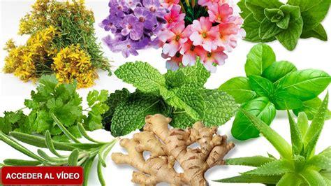 las 10 mejores flores medicinales 10 plantas medicinales que puedes tener en tu casa o