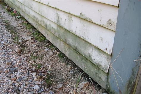 how to remove mold from house siding mold on house siding 28 images gallery the proserve how to prevent mold on home s