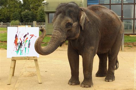 painting zoo zoo unveils its painting elelphant 187 gagdaily news