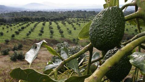 Backyard Growers In The News John Vena Inc