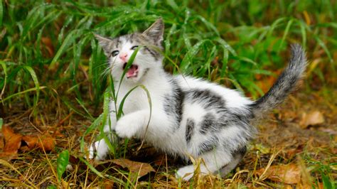 do dogs eat cats why do dogs and cats eat grass vetdepot