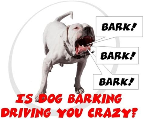 how to keep a puppy from barking barking sandlot k9