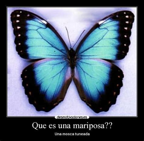 imagenes una mariposa image gallery imagenes de una mariposa
