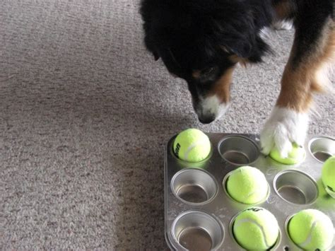 puppy puzzle toys 33 diy toys from things around the house barkpost