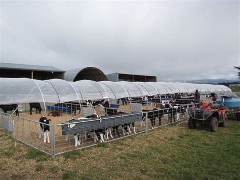 calf rearing gallery flexitunnel