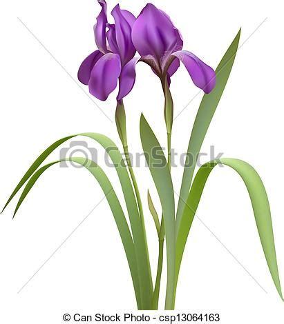 clip art vector of purple iris flowers isolated on white