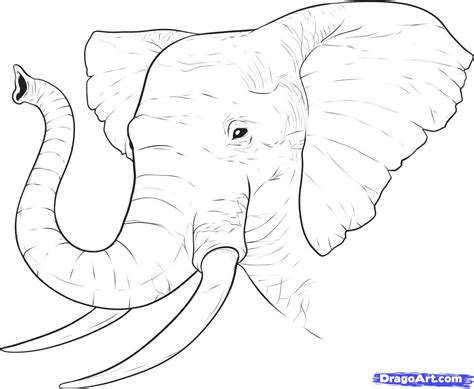tutorial vector realistic how to draw a realistic elephant draw real elephant step