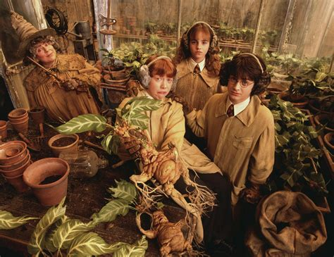 herbology harry potter photo 2254958 fanpop