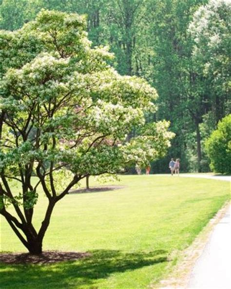 Brookside Gardens Maryland by 17 Best Ideas About Silver Maryland On