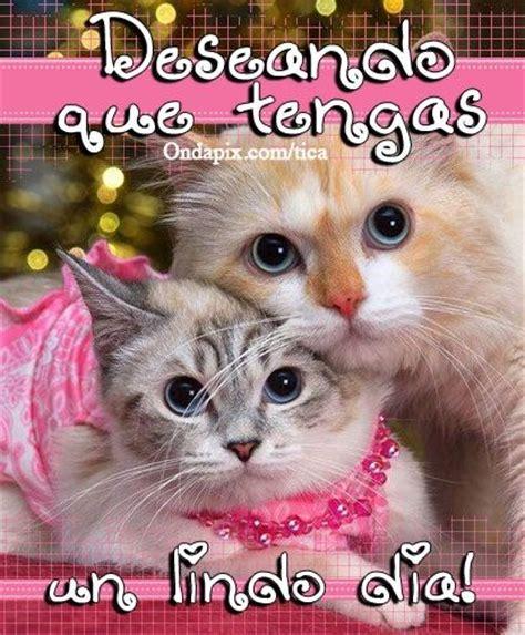 imagenes feliz domingo con gatos deseando un lindo dia animales gatos tarjetitas cats